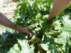 Twisting the zucchini
