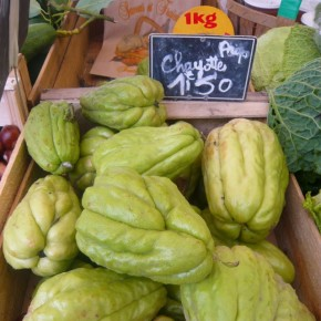 Chayotes in Cagnes-sur-mer