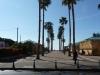 Palm tree lane leading to the market