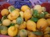 Small producers of lemons