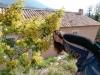 Segolene and Mimosa