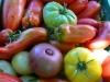 Closeup of muticoloured tomatoes