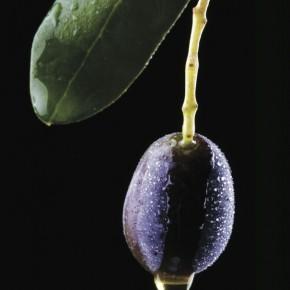 Ligurian Olive Oil Festival